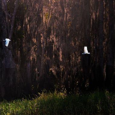 Florida Woodlands