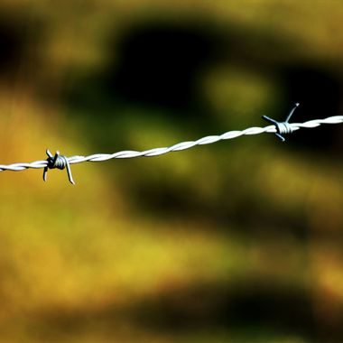 Barbed Wire in December
