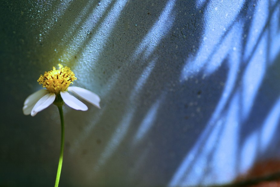 The flower and the shadows.