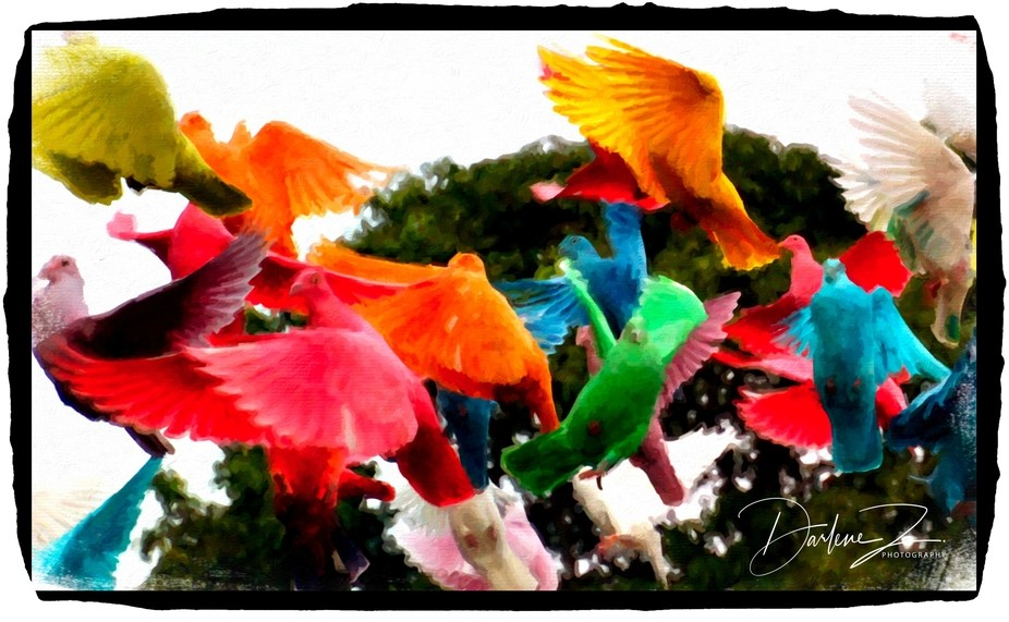 Dyed pigeons on Molokai used for weddings, etc.  Beautiful.