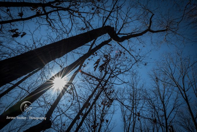 Trees and Blue Sky by serenamoultonvachon - Tree Silhouettes Photo Contest