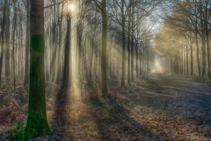 soft lights in the forest by egonzitter - Moody Vistas Photo Contest
