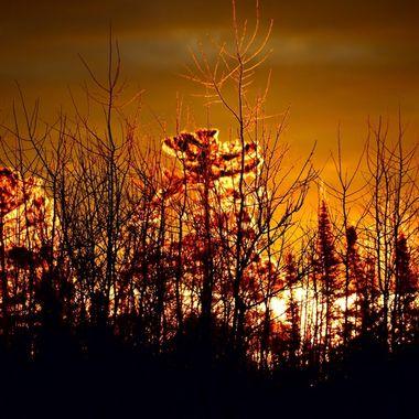 1/9/18 Sunrise along a power line Nikon D3400 70-300 lens Vivid