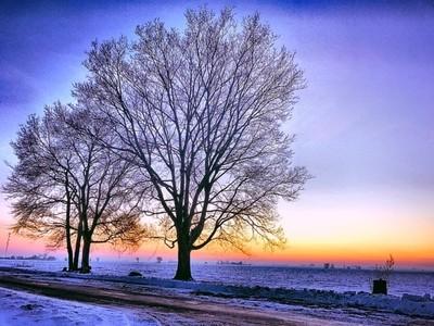 Sunset n Trees