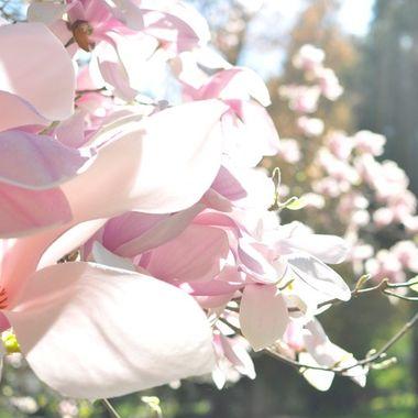 Lithia Park in Spring