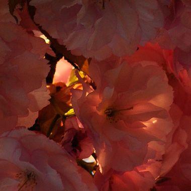 Belle Fiore Floral