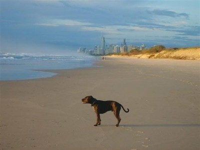 Gold Coast dog beach
