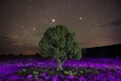 Burst of Purple in the Desert