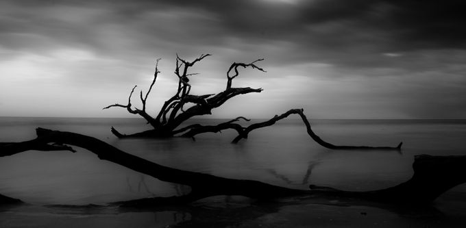 untitled-49 by Gadget699 - Fallen Trees Photo Contest