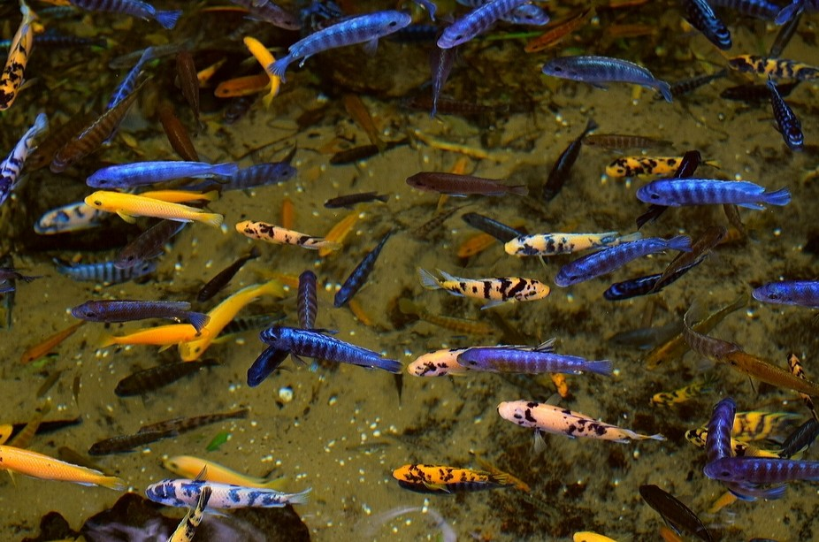 Colourful fish in stream at Animal kingdom