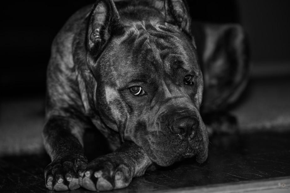 B&W Pet portrait