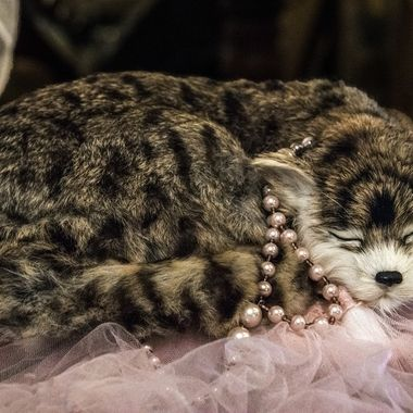 Cat with Pearls