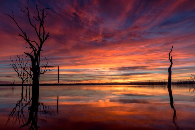 IMG_8999 by anthonyhfoto - Tree Silhouettes Photo Contest