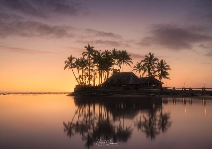 Palm Tree Sunset by Harvey_Shahnam - Social Exposure Photo Contest Vol 13