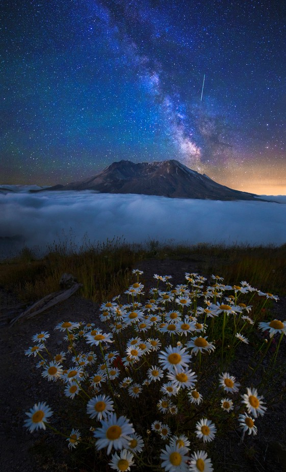 Daisy Dream  by maraleite - The Milky Way Photo Contest