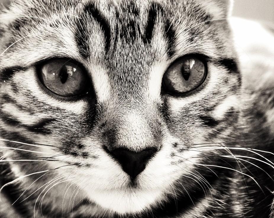 Loving stare