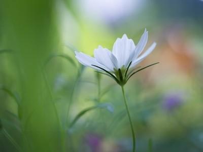 Little wildflower