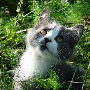 Nina's kitty