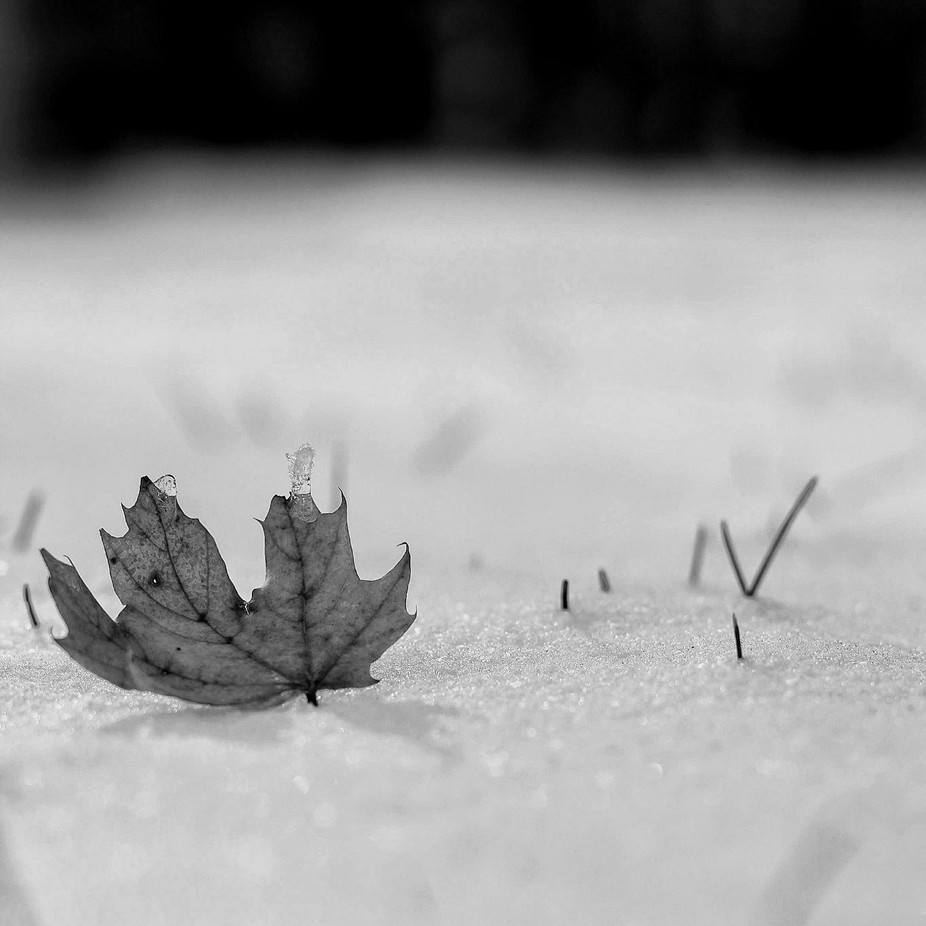 Frozen by Heathered - Winter In Black And White Photo Contest