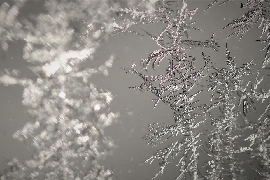 One morning the window was covered with these fantastic ice crystals.