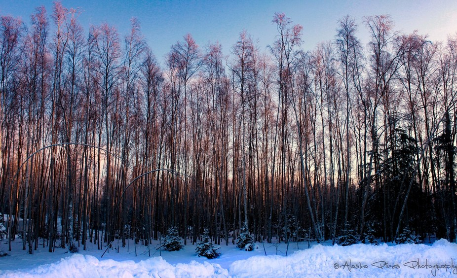 Taken from a neighborhood church, the alpenglow colors of an Alaskan winter sunset.