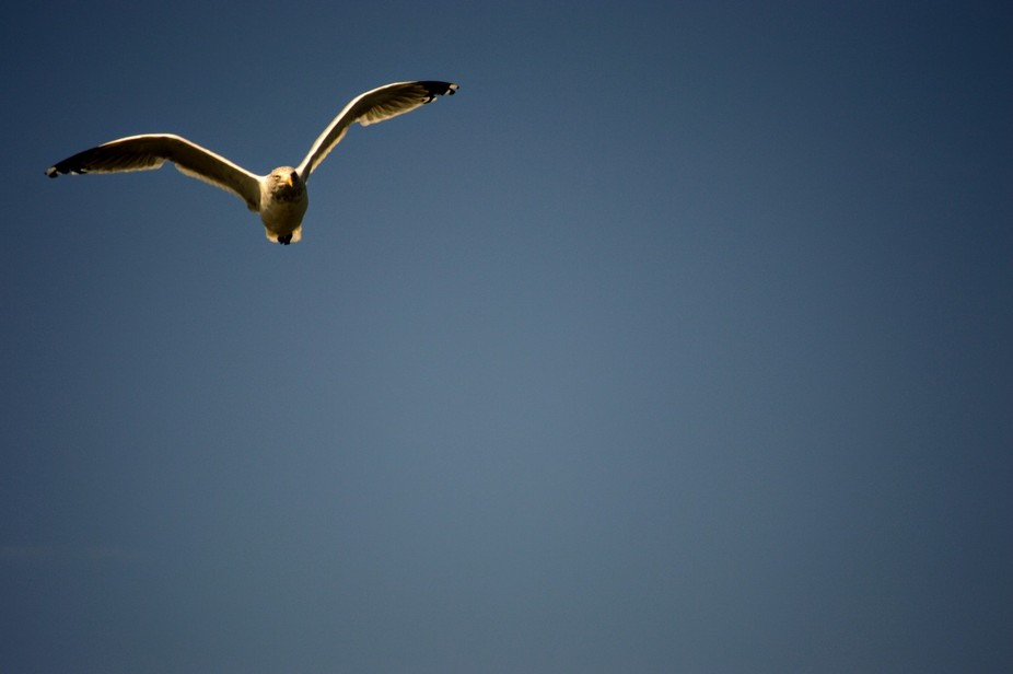 Cape May, N.J. - Captured this shot while whale watching.  No whale sightings, so I took to the sky!