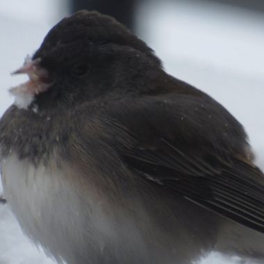 Little bird on a snowy day