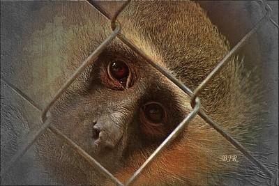 IMG_4117 Captivity