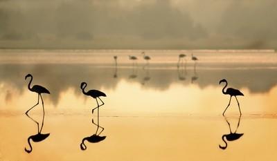 Flamingos in Doñana