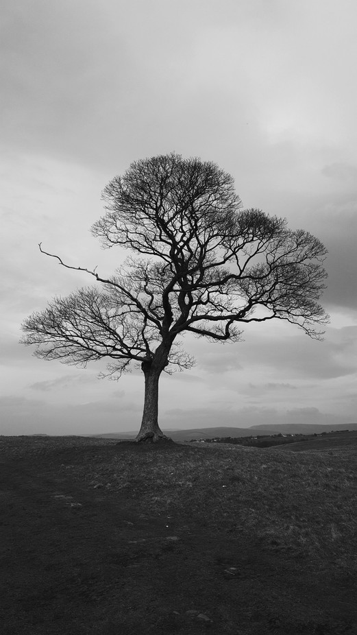 Lonely tree by JodieAlexandra - Tree Silhouettes Photo Contest