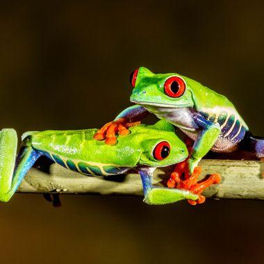 Froggie cuddle