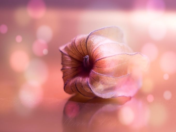** La Vie en Rose ** by Marierich - Pastel Colors Photo Contest
