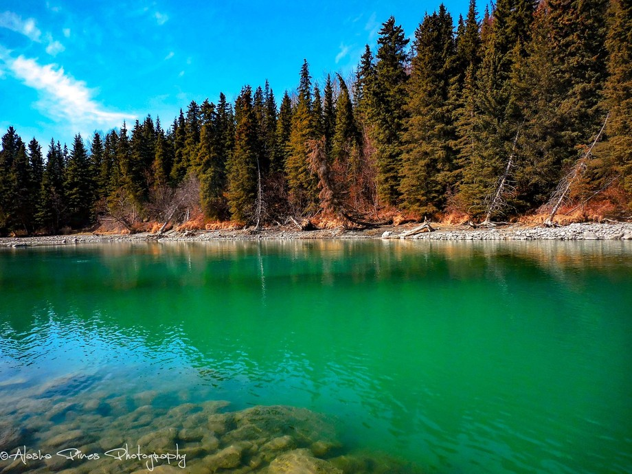 This is a stretch of the Kenai River that has very deep pools, where the colors are such a brilliant turquoise, it's hard to believe it's real.