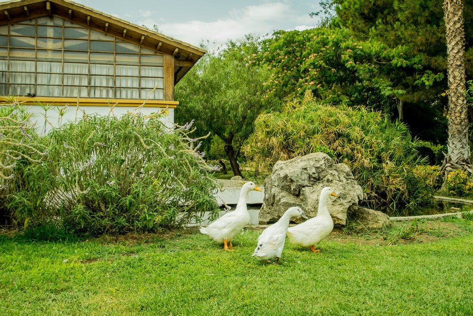 A family of ducks relaxing in my local park in Marbella, Spain