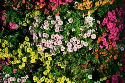 Colourful flower garden