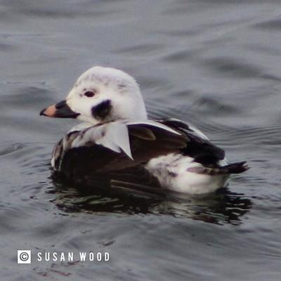 Ducks ???? on Lake Ontario in Oswego #greatlakes #upstatenewyork #ilovenewyork #iloveny #ispyny #ducks #ourfunnynature #bns_birds #birdsandblooms #birdsofinstagram #birds #duckphotography #waterbird #waterbirdsofinstagram #waterbirds #naturephotography #n