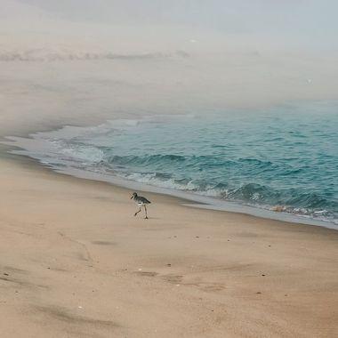Mexico, on the sea of Cortaz, Baja.