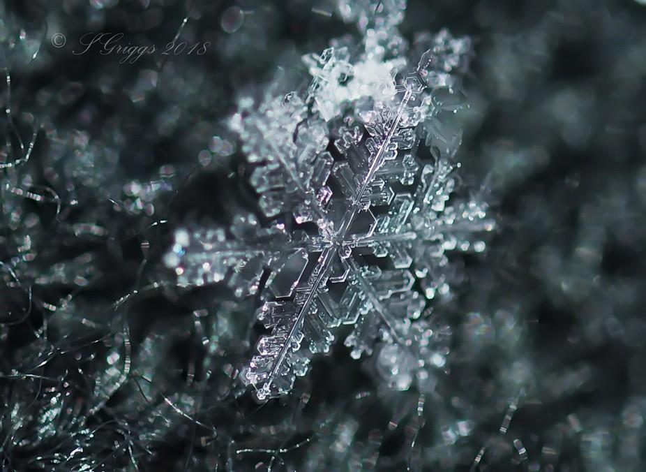Frozen Sunshine!