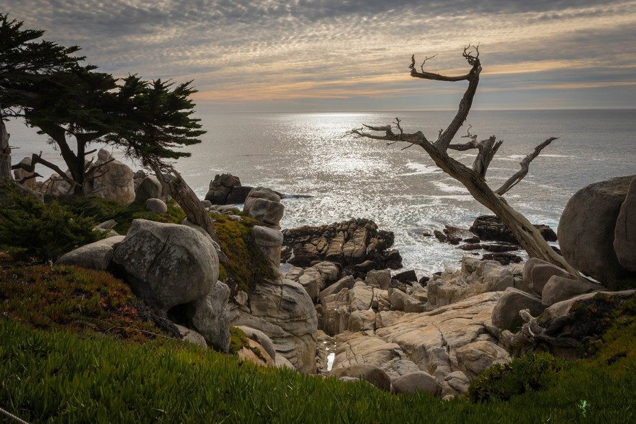 a shot of the ghost tree along the 17 mile drive in Carmel California.