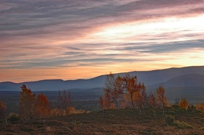 Red sky and silver birch trees Cairngorms Scotland UK