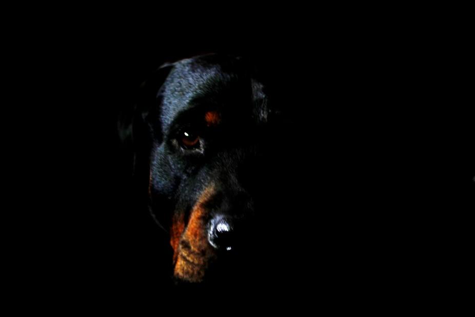 Nice dog photo