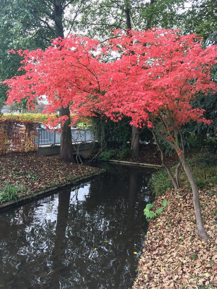 Taken in a corner of the Water Gardens just before the tree lost its leaves.