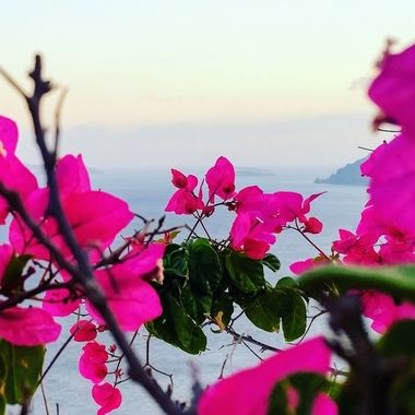 Taken in Oia Santorini Greece, these flowers grew infront of the path adding some color to my view of the ocean.
