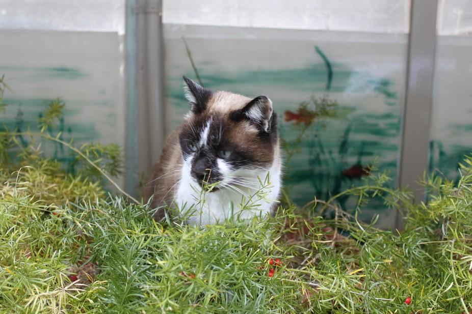 Stray cat in Sorento, Italy