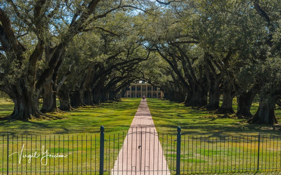 A trip to Louisiana would not be complete without seeing some of the 1700/1800's era Mansions that dot the landscape.  This is Oak Alley, some movies have been filmed here.  The row of oaks was thought to have served to draw cooler air from the Mississippi River (behind me) towards the house.