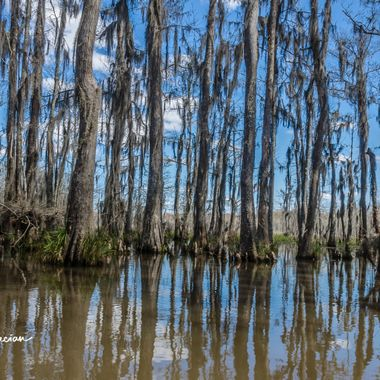 The swamps and bayous of Louisiana are beautiful.  The combination of old trees, swamps, gators, voodoo and the smell of Cajun and Southern cooking make it a wonder to visit.