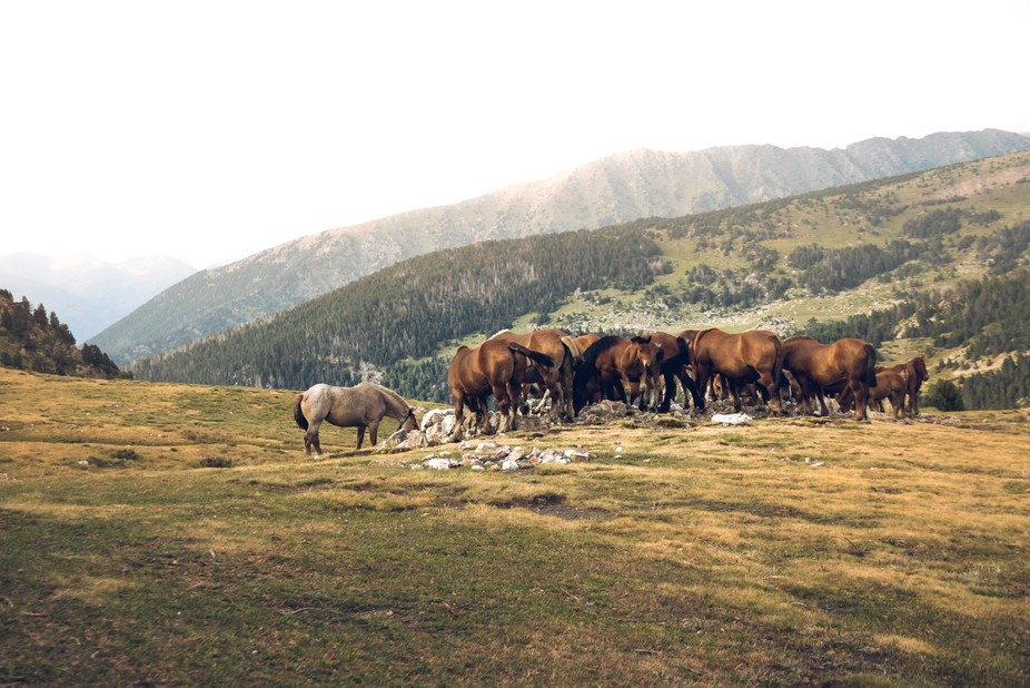 Wild Horses in the Vall Madriu