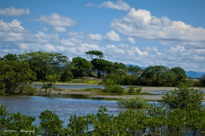 """Natural reserve """"Las Cucharas"""" is located on the shores of Ponce on the South Coast of Puerto Rico, and many species of birds come here annually to pass the cold season here."""