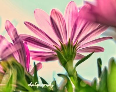 Flower and sunlight