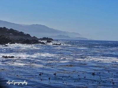 Ocean wild Birds and Mountains !